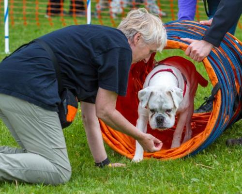 Dog Show & Fun Day May 2017