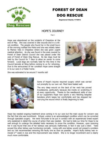Hope's write-up and thank you Page1