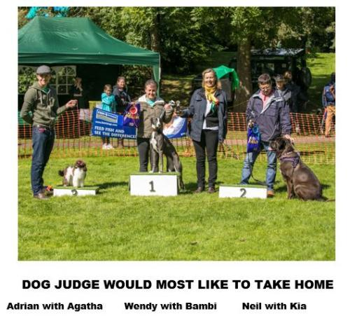 Newent Onion Fayre Dog Show September 2017